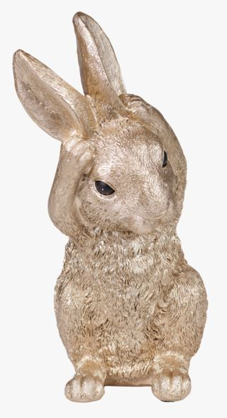 Rabbit no hear koriste kulta