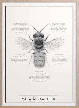 Våre elskede bier 50x70 cm