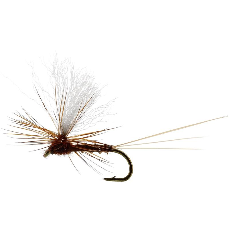 Vespertina Dun Biot Brown #16 TMC100