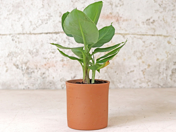 Tal Cylinder Plant Pot