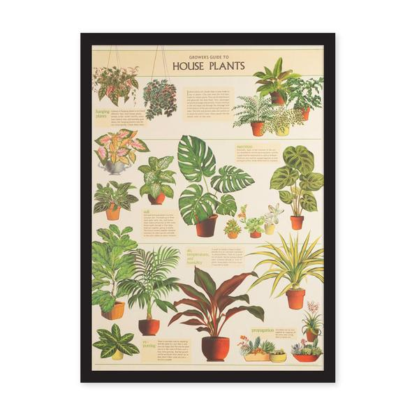 House Plants Art Print Large