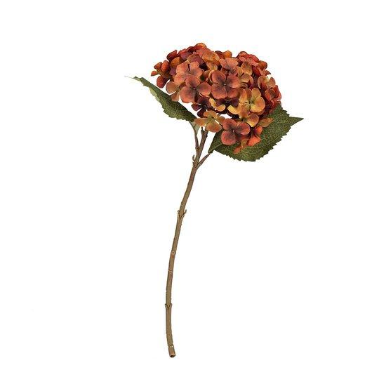 Blomst Hortensia rustrød