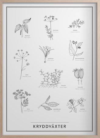 Krydderplanter Poster 30x40 cm