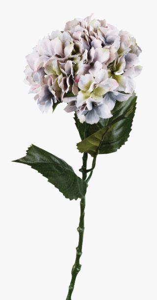 Hortensia kukka sumuinen liila