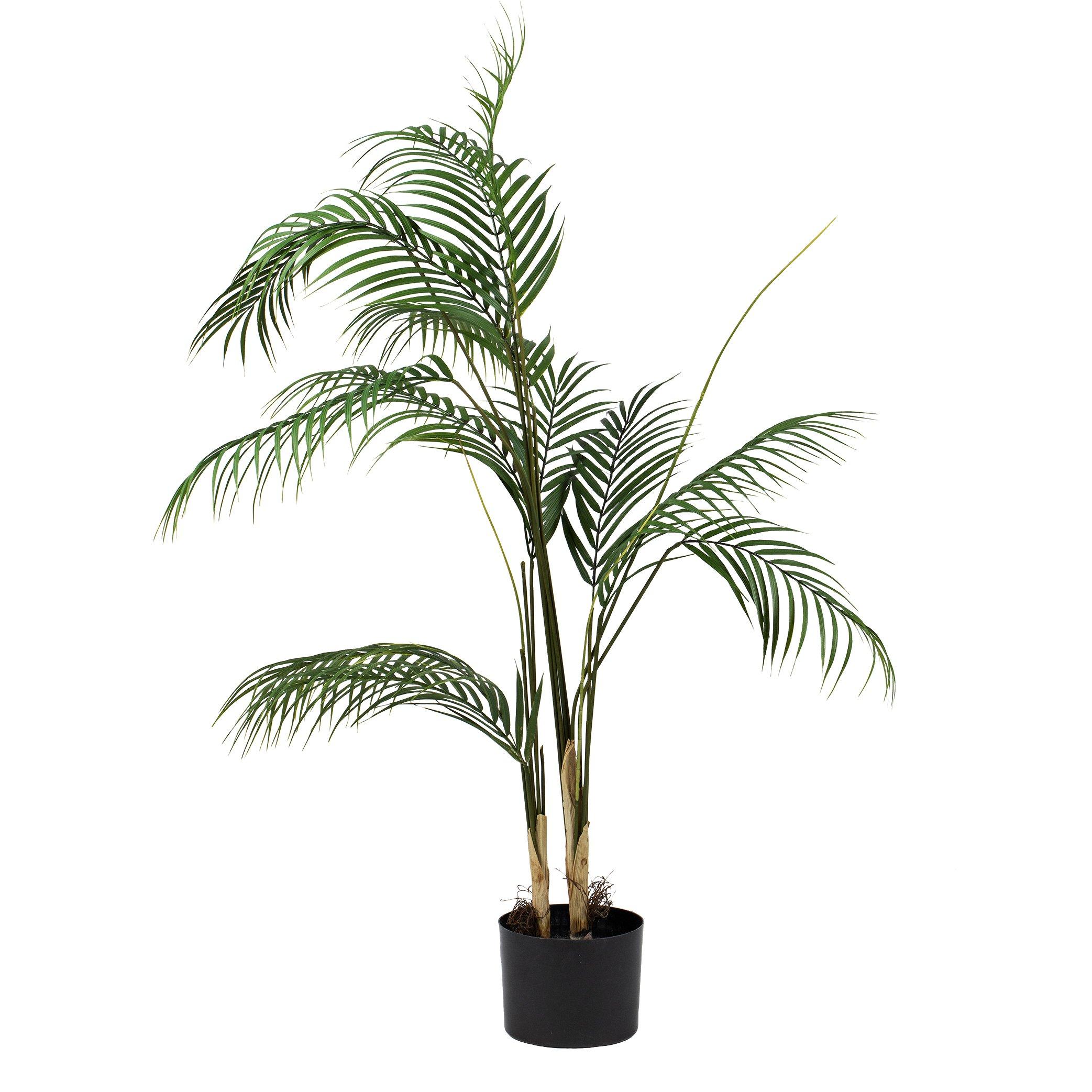 Plante Palme stor