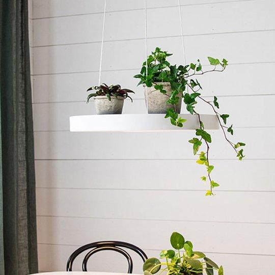 LED-hengelampe Plate, hvit