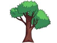Раскраски Деревья и листья