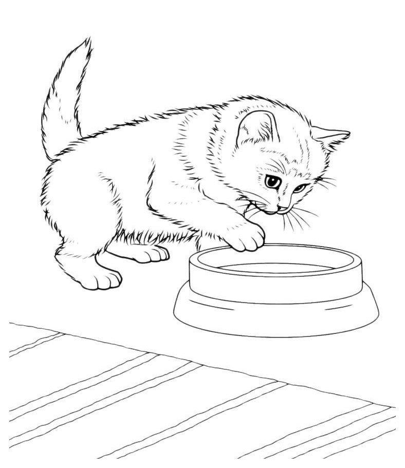 Раскраска Кот опускает лапу в мисочку - распечатать ...