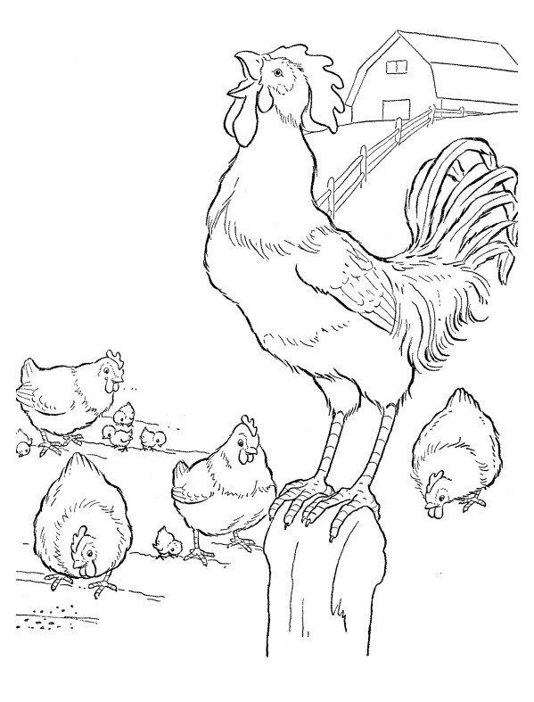 Раскраска Петух и куры