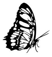 Раскраска Бабочка кушает