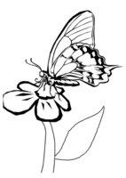 Раскраска Бабочка на ромашке