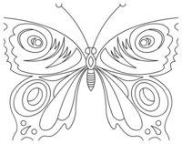 Раскраска Бабочка с изысканным узором крыльев