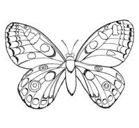 Раскраска Бабочка с шикарными крыльями
