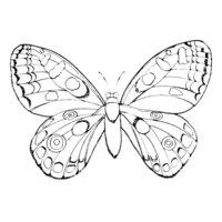 Раскраска Бабочка в капельку
