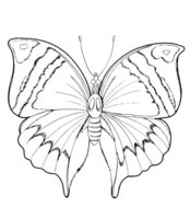 Раскраска Бабочка в поисках еды