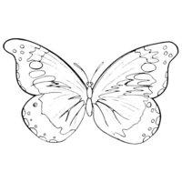 Раскраска Бабочка в полосочку