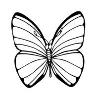 Раскраска Бабочка веселится
