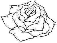 Раскраска Бутон розы