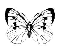 Раскраска Лёгкая бабочка