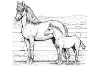 Раскраска Лошадь и жеребёнок