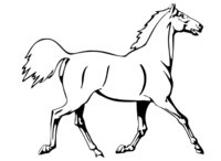 Раскраска Лошадь на показе