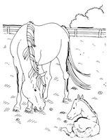 Раскраска Лошадь со своим малышом