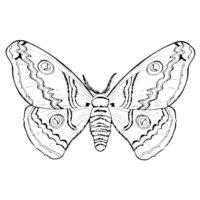 Раскраска Мохнатая бабочка