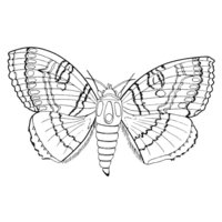 Раскраска Молодая бабочка