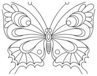 Раскраска Незабываемая бабочка