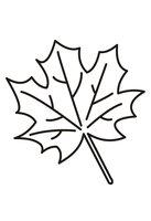 Раскраска Падающий кленовый лист