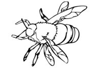 Раскраска Пчела