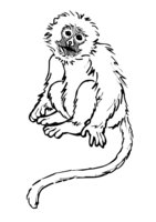 Раскраска Печальная обезьяна