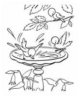 Раскраска Первые птенцы