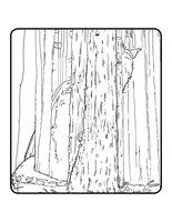 Раскраска Пит и Эллиот в лесу