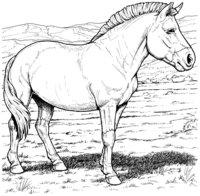 Раскраска Пони на лугу