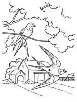 Раскраска Прилет птиц