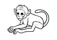 Раскраска Простая обезьяна