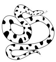 Раскраска Пятнистая змея