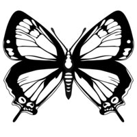 Раскраска Шикарная бабочка