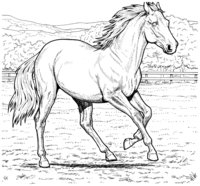 Раскраска Скаковая лошадь