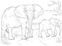 Раскраска Слониха со слонёнком