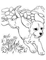 Раскраска Собака убегает от обидчика