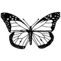 Раскраска Уставшая бабочка