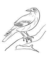 Раскраска Ворона на ветке дерева