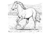 Раскраска Выгул лошади