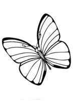 Раскраска Задумчивая бабочка
