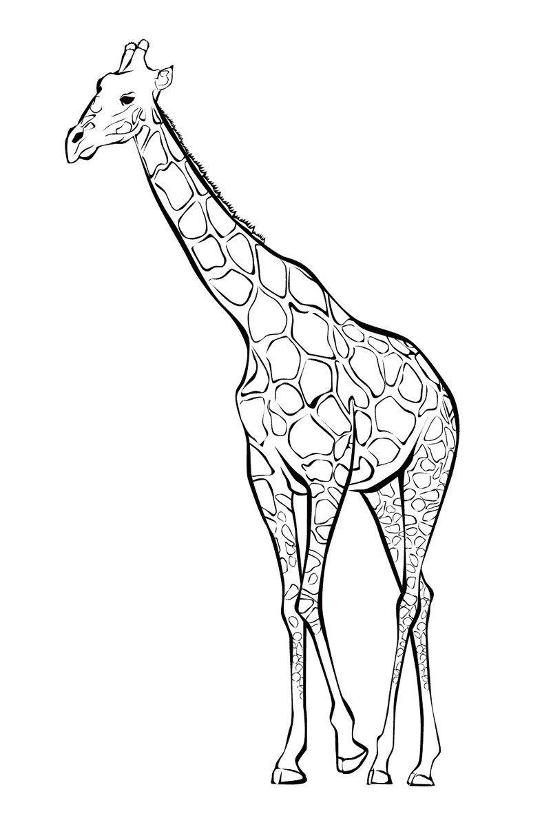 раскраски дикие животные распечатать бесплатно в формате а4