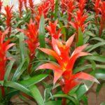 Güneş Işığını Az Alan Evlerde Hangi Bitkiler Yetiştirilmelidir?