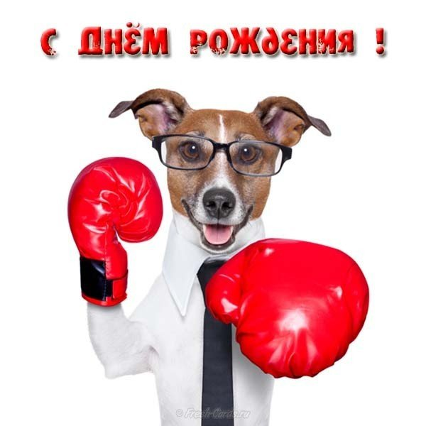 otkrytka-s-dnyom-rozhdeniya-bokseru.jpg