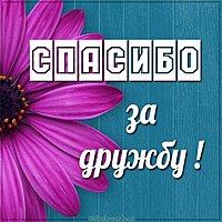 Бесплатная открытка спасибо за дружбу
